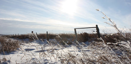 Barbwire fence with winter sun