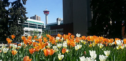 snapix_flowers_in_front_of_calgary_tower