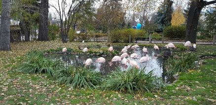 snapix_calgary_zoo_flamingos
